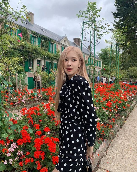 beautiful Rose blackpink with polka dress